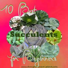 10 Best Succulents for Beginners - easy, low maintenance & beautiful succulents