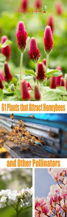 Here is a list of 61 plants that attract honeybees and other pollinators. This list will give you an idea of which wild plants bees love to work and some ideas on what to plant in your own garden. planting 61 Plants That Attract Honeybees Gardening For Beginners, Gardening Tips, Flower Gardening, Gardening Books, Permaculture, Backyard Beekeeping, Save The Bees, Grow Your Own Food, Growing Plants
