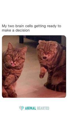 Funny Animal Jokes, Funny Cute Cats, Funny Animal Videos, Funny Animal Pictures, Cute Funny Animals, Animal Memes, Fat Cats Funny, Stupid Animals, Animal Humour