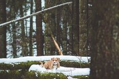 Mariiana Capela photographer Belgium - Les Ardennes Dog photography