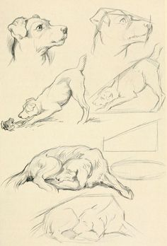 15 Great Drawing Tips for Beginners - kunst - Hunde Bilder - Animals Drawing Techniques, Drawing Tips, Drawing Sketches, Painting & Drawing, Sketching, Learn Drawing, Book Drawing, Drawing Ideas, Animal Sketches