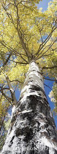 2012 Rocky Mountain National Park, Colorado