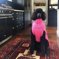 Please tell me you follow @amybethcupp who is an incredible designer (interiors, flowers, food!) with the most macho standard poodle in town Isn't this kitchen to die for?! FYI, my black standard is seriously crushing on Tauren poodle Wouldn't you if you were a ?! Reposted photo by the multi talented: @amybethcupp #fridayfollow #kitchen #poodlelove #standardpoodle