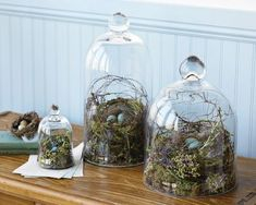 bell jars with nests