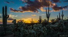 Tromping around the overflow/horse parking area for the First Water trailhead.  I really liked this comp. where it looks like all the cholla/saguaro's have circled and gathered for the sunset.    Superstition Mountains Sigma 18-35mm f/1.8 Art