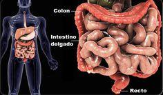 Una cantidad proliferante de investigación, ha relacionado a un intestino enfermo con una serie de problemas de salud, desde alergias hasta la artritis.
