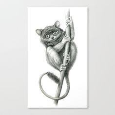Philippine Tarsier G2012-047 Stretched Canvas by S-Schukina - $85.00