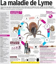 La maladie de Lyme. À partager pour information.