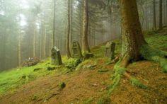 Cent ans après, les vestiges de la première guerre mondiale subsistent dans nos paysages.   Les sépultures des Allemands tués dans cette forêt vosgienne ont été transférées dans leur pays, mais les stèles gravées par leurs camarades sont restées.