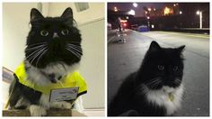 At the young age of just nine weeks, Felix the cat was hired at London'sHuddersfield Railway Station to helpalleviate a rodent infestation in 2011. After five years of dedication to the job, this mouse-catching kitty has received the official title of …