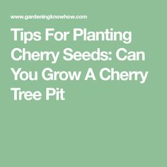 Tips For Planting Cherry Seeds: Can You Grow A Cherry Tree Pit