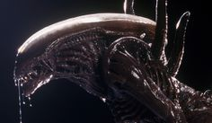 Alienressideoo