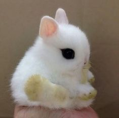 Quite possibly the cutest bunny ever. (Even with the dirty feets)