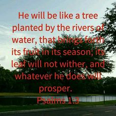 Psalm 1:3  http://bible.com/1171/psa.1.3.mev He will be like a tree planted by the rivers of water, that brings forth its fruit in its season; its leaf will not wither, and whatever he does will prosper.