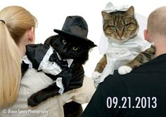 Save the Date with cats! What a great way to use your pets in the Save the Date postcards. Best wedding save the date ever!  Photography with cat bride & groom costumes!  I love Bruce Spero Photography in Boston!