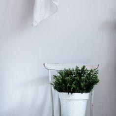 Myrte , décoration végétale, green home #madecoamoi