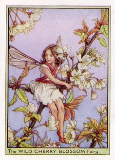 Wild Cherry Blossom Flower Fairy Vintage Print by TheOldMapShop