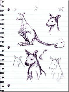 Nessa Dee. Kangaroo sketches.