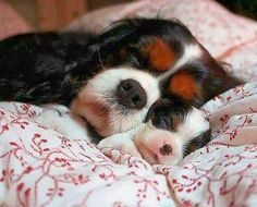 5 Adorable sleeping pets flooding with cuteness, Click the pic to see all