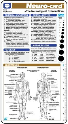 a9247a68c7816 neuro exam template Neuro-card      by SCYMED    Medical Decision Systems