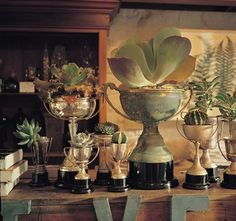 trophies for the girls equestrian inspired room