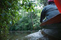 The life in the Amazonas  --- vidapasion ---