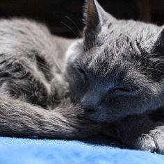 我が家の猫🐾 寝てるだけでも癒される( *´꒳`*) もっともっと可愛い写真撮りたいけど 私がカメラ向けると変な顔する🙄 ぱぱさんには可愛い顔するのに〜!なんでw だけん可愛いからいつも許しちゃう〜☺️💕 #0212#猫#愛猫#チェリーちゃん#自慢の愛猫#一眼レフ初心者