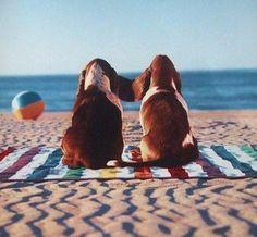 Beach Bassets - so cute!