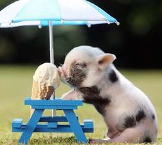 20 Funny Animals Eating Pictures