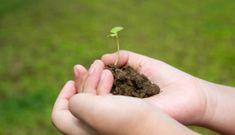 Safe Gardening for Kids