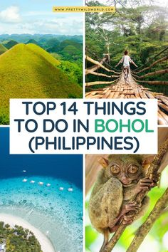 Looking into visiting the Philippines and explore its vast islands and epic sceneries? Check out this post about the top things to do in Bohol and find out what amazing things it have to offer! Siargao, Palawan, Bohol Philippines, Philippines Travel, Coron, Cebu, Best Places To Travel, Cool Places To Visit, Beach Trip