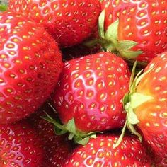 """Sorte Die Kreuzung """"Vima Zanta"""" wurde aus den Sorten """"Elsanta"""" und """"Korona"""" kombiniert, wodurch sie resistenter gegen Pilzkrankheiten ist. Die rollenden Blätter sind ein Kennzeichen dieser Sorte, ihre dunkelroten Früchte sind saftig mit besonders gutem Geschmack und einer markanten Krone. Ob einfach pur genossen, in Desserts mit Joghurt, kreativen Salaten oder einfach als Marmelade, Erdbeeren sind in jeglicher Form ein Hochgenuss und für viele das Highlight des Gartenjahres. Das beliebte… Form, Strawberry, Fruit, Desserts, Number Plates, Harvest, Marmalade, Strawberries, Mushrooms"""