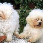 Cani & gatti: come farli andare d'accordo anche se non sono cresciuti insieme