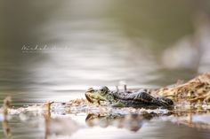 Wildlife Photography, Animal Photography, Czech Republic, Nature Photos, Canon, Portrait, Animals, Instagram, Self