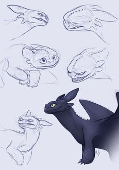 Toothless Sketches by KlaraGibson.deviantart.com on @DeviantArt