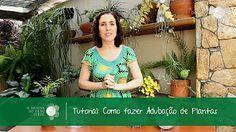 Nô Figueiredo Ensina como Adubar as Plantas que Florescem ou Frutificam - YouTube