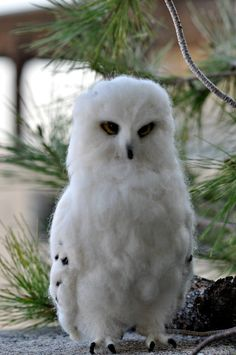 Needle Felted Wool Animals Waldorf  White Owl by darialvovsky, $68.00