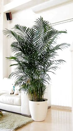 Space saving Indoor Planters DIY Ideas is part of Room Decor DIY Plants - Either you like home gardening or not but after reading my this article you will be loving home gardening as m Fall Planters, Indoor Planters, Indoor Gardening, Planters Shade, Indoor Plant Decor, Planters Flowers, Winter Planter, Gardening Hacks, Garden Planters