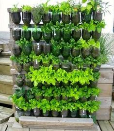 Indoor Vegetable Gardening 20 Vertical Vegetable Garden Ideas - Vertical gardens can be an alternative to insufficient space in your yard. Spring is fast approaching, so soon you can Home Vegetable Garden Design, Vertical Vegetable Gardens, Vertical Garden Design, Indoor Vegetable Gardening, Vegetable Garden For Beginners, Gardening For Beginners, Organic Gardening, Small Vegetable Garden Ideas On A Budget, Apartment Vegetable Garden