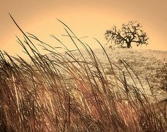 "Nature Photography - grass photograph, brown golden grass swaying in the wind in front of a tree,  wall art - gold photograph - ""Wind"""