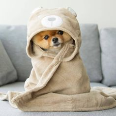 But I want to cuddle you ❤ Sometimes you just want a Snuggle Sandwich make it a combo and upsize it! The best things in life are free and given! Oh what #cutenessoverload this little bundle of #love is @jiffpom makes me want to adopt another furry...