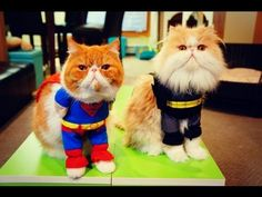 The Kitty Knight Rises & Kitty of Steel