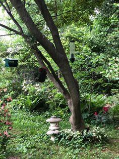 Serenity, Wood, Garden, Plants, Garten, Woodwind Instrument, Timber Wood, Lawn And Garden, Gardens