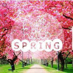 #firstdayofspring #pepinrealty #mikepepin #realtor #realestate #flowers #floridaliving
