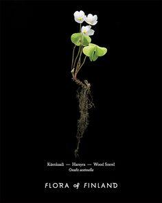 Käenkaali – Flora of Finland