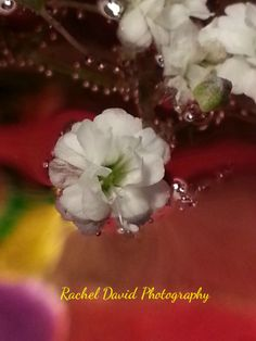 The enchanting beauty of Baby's Breath
