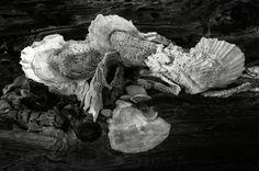 Shells on a log