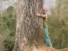 Capixaba que plantou mais de meio milhão de árvores no ES. www.gilbertopinheiroimoveis.com.br