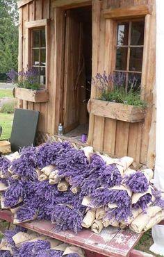 Lavender Cottage, Lavender Garden, Lavender Blue, Lavender Fields, Lavender Flowers, Purple Flowers, Lavander, Lavender Ideas, Beach Flowers