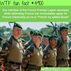 WTF Fun Facts is updated daily with interesting & funny random facts. We post about health, celebs/people, places, animals, history information and much more. New facts all day - every day! Wtf Fun Facts, Funny Facts, Random Facts, Crazy Facts, Random Stuff, Strange Facts, True Facts, Random Things, The More You Know